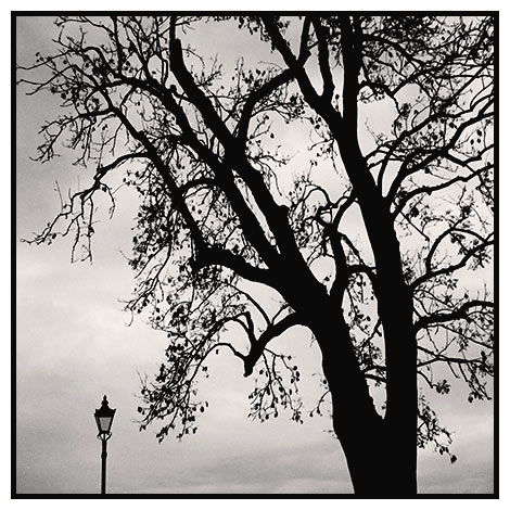 lamp and tree battersea park