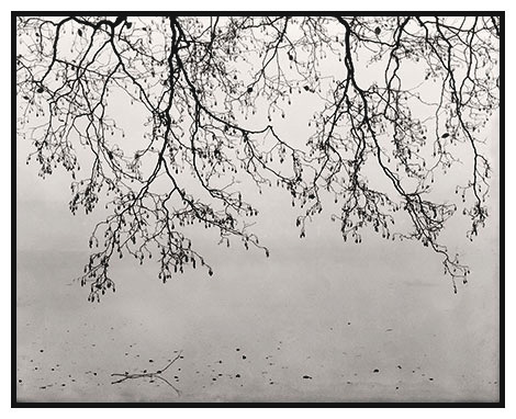 frozen lake, branches